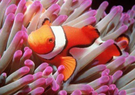 Dove Vive Il Pesce Pagliaccio.Pesci D Acqua Dolce E Pesci Di Mare