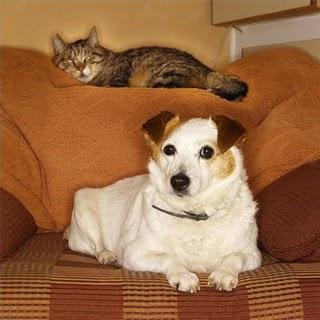 Rumori: se il cane del vicino abbaia e ti molesta - La Legge per Tutti