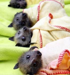 piccoli pipistrelli nella nursery