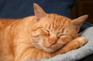 [Immagine: gatto-rosso.jpg]
