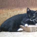 Corretta alimentazione per i gatti sterilizzati