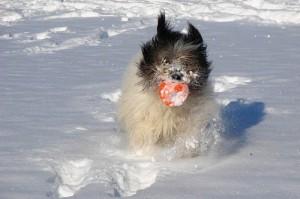 Come proteggere i cani dal freddo: 5 consigli utili! – Petpassion.tv