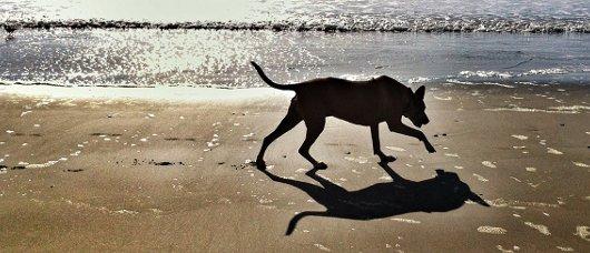 spiagge per cani in liguria
