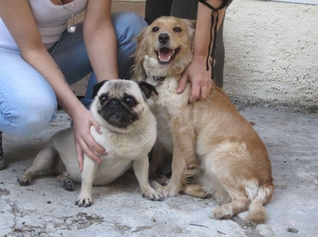 Cani di razza in regalo