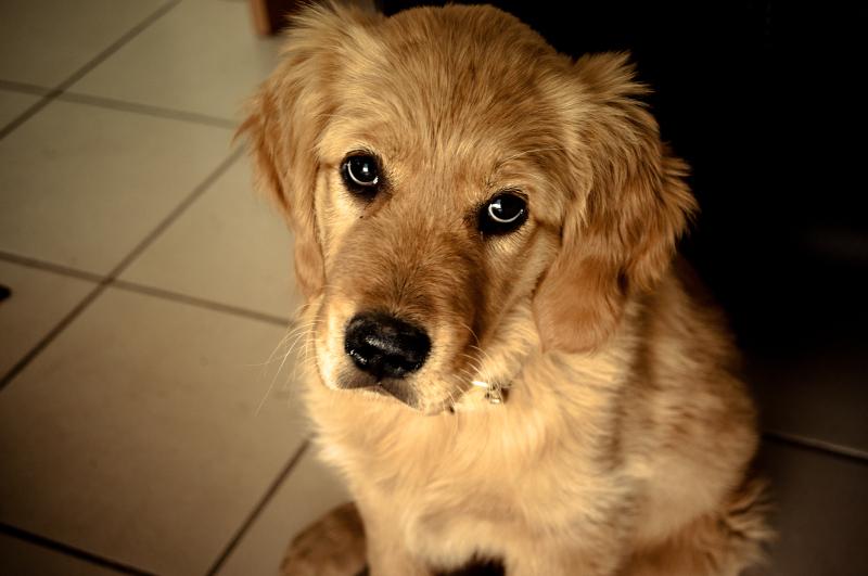 Cani e gatti in condominio non possono essere più vietati: la riforma è legge  Petpassion Blog