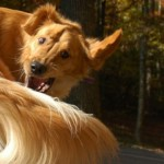 """Perché i cani hanno il """"naso"""" umido?"""