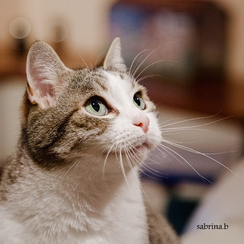 Gatti famosi: ecco chi è Astro Micio Bello