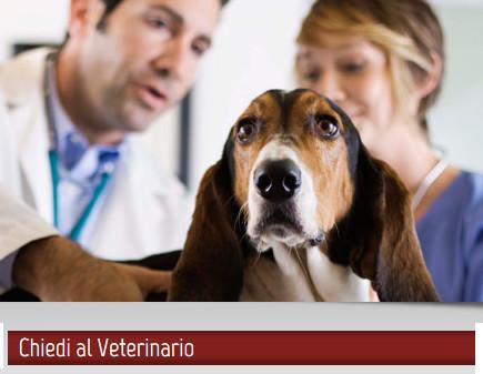 Leishmaniosi del cane: consigli su cura e prevenzione in autunno