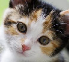 curiosita-gatto-copertina