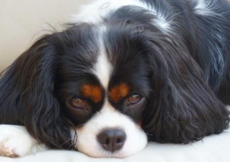 cane-ansia-da-separazione-copertina