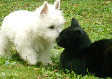 cane-gatto-primavera2
