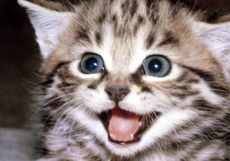 gattino-curiosità
