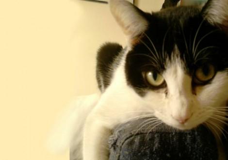 gatto-felix