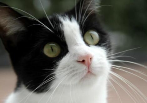 gatto-casa-community