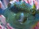 acquario-come-rinfrescarlo