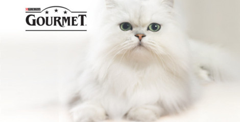 gatto-gourmet-purina